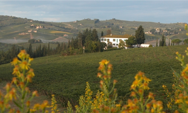 Triacca Santavenere winery in Montepulciano | Triacca Santavenere winery | Triacca Santavenere of the Triacca family ||