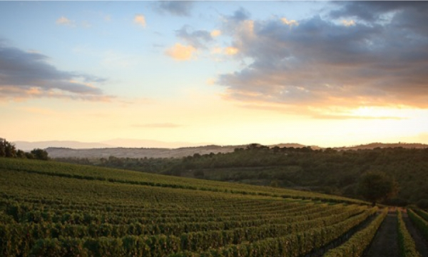 Roccapesta winery in Maremma Tuscany | Roccapesta and its vineyards in Scansano | Roccapesta's bottles ||
