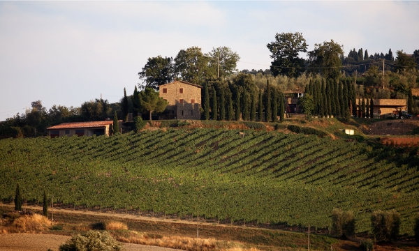 La Gerla, winery in Montalcino | La Gerla winery producing Brunello di Montalcino ||