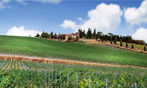 Carpineto, winery in Greve in Chianti ||