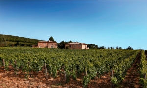 Le Potazzine, winery in the denomination Brunello di Montalcino ||