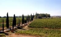 Podere Boscarelli, azienda vinicola in Toscana