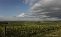 Brunello di Montalcino vineyards in La Rasina