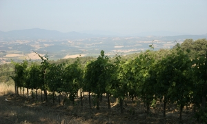 Podere San Lorenzo's vineyards in Montalcino
